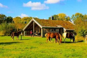 Reiterferien in Schleswig-Holstein