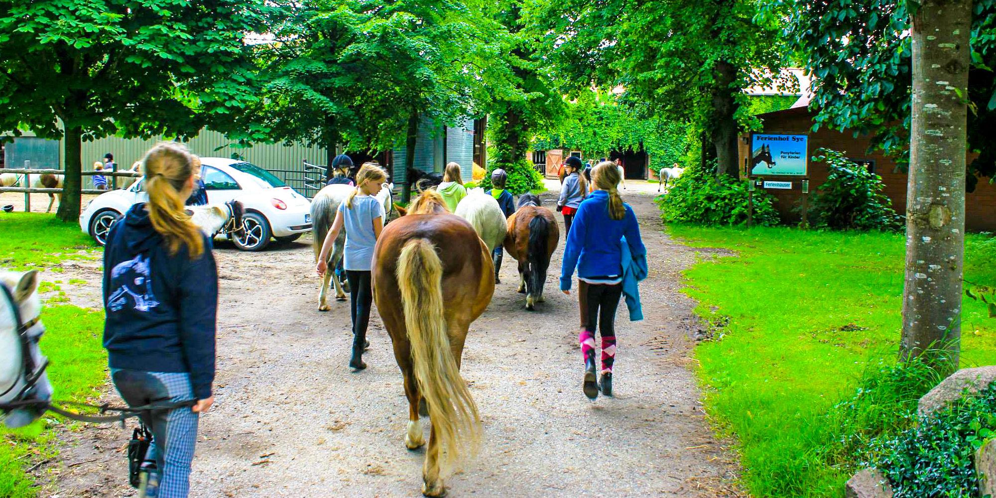Ponyhof in Schleswig-Holstein