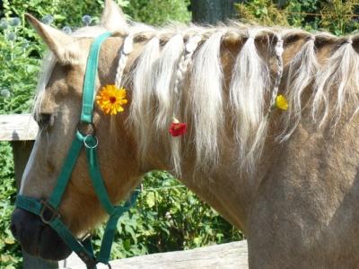 Leila mit Blumenschmuck f.d. Reiterspiele